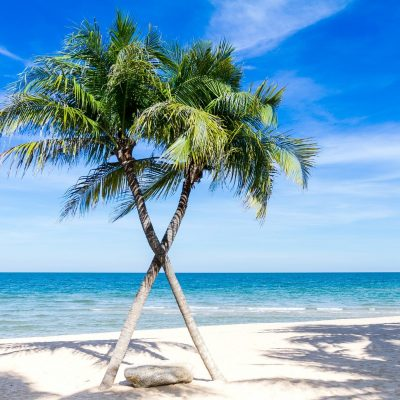 caribbean, palm trees, pacific